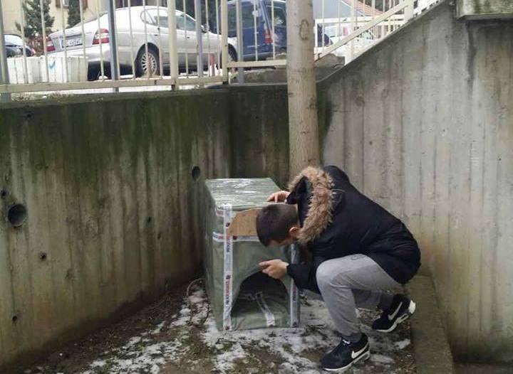 Mihailo Milčić,pressserbia,Spasimo pse od zime,pomozimo životinjama