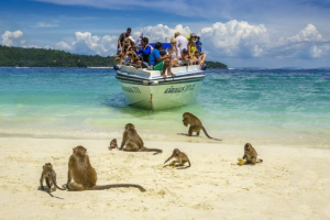 Na tajlandskoj plaži turiste dočekuju prijateljski raspoloženi majmuni