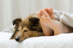 Da li je spavanje sa psom zdravo? Evo odgovora...