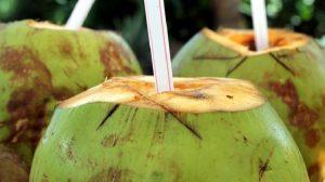 Šta sve leči kokosova voda: prirodni napitak za regenerisanje organizma i lepotu!