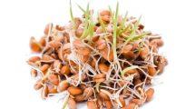 Pšenične klice su odlične za naše zdravlje. Ovako ih možete praviti i pripremati! (Recept)