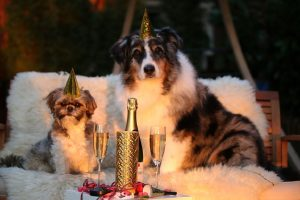 Doček Nove godine – opasan stres za kućne ljubimce!