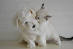 Volite mačke ili pse? To mnogo govori o vama!