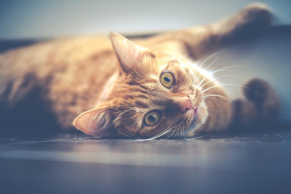 Znate li šta je to mačija joga?