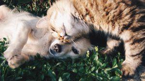 Kompilacija kućnih ljubimaca koji kijaju ulepšaće vam dan (VIDEO)