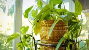 Sprečite disajne probleme: 5 sobnih biljaka koje isušuju i(li) vlaže vazduh