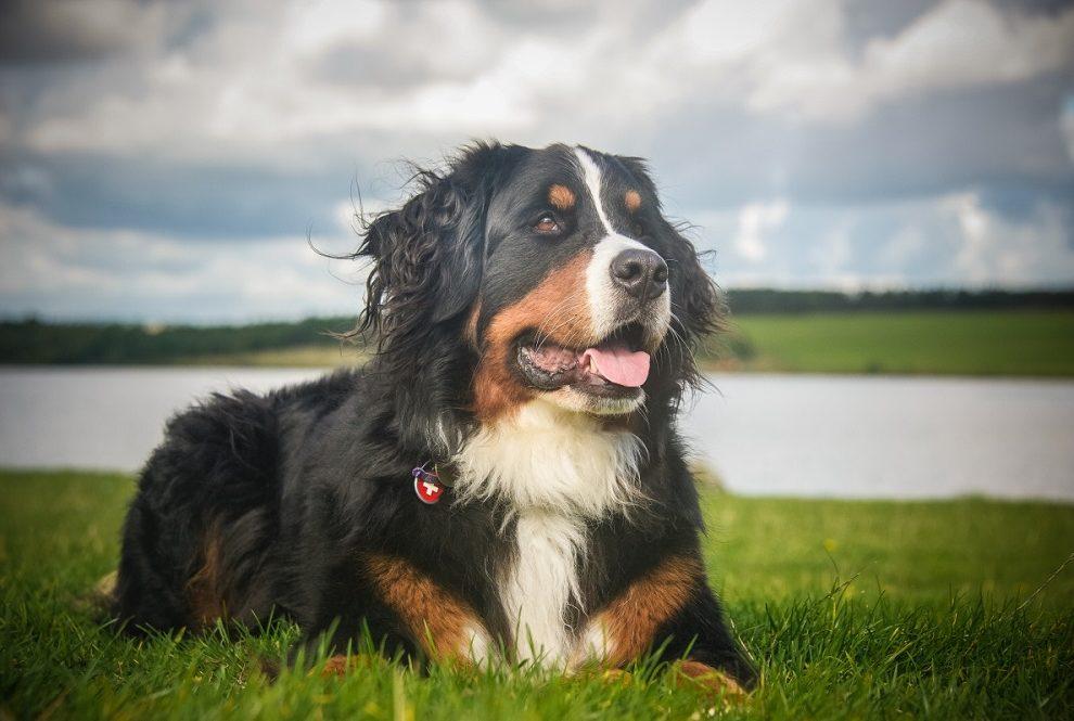 Pet stvari koje psi mogu da osete kod ljudi! Poslednje DVE se nikad ne biste setili
