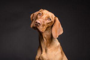 OOO NE, POGREŠILI STE! Psi ipak NISU najpametnije životinje na svetu!