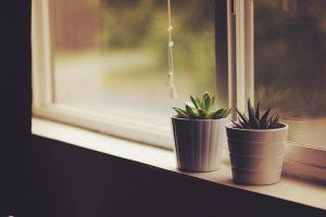 Nekoliko trikova kako da vratite biljkama sjaj