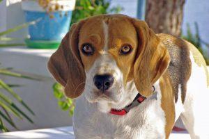 Sve neverovatne stvari koje psi mogu da nanjuše!