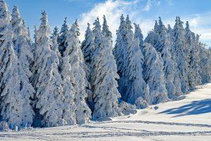 Sibir: Pobegle iz vrtića na -45C da iznenade roditelje
