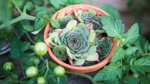 Ovo voće i povrće može da se uzgaja na terasi!